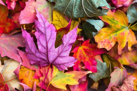 Podzimní menu